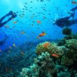 snorkel west abay
