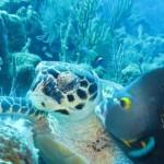 turtle2fish