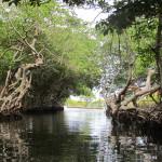 Mangrove-tour 3